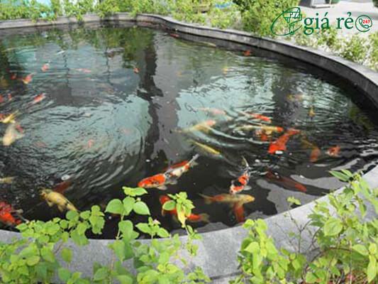 Cách chống thấm hồ cá cảnh