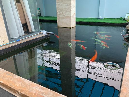 Sơn chống thấm hồ cá và giá